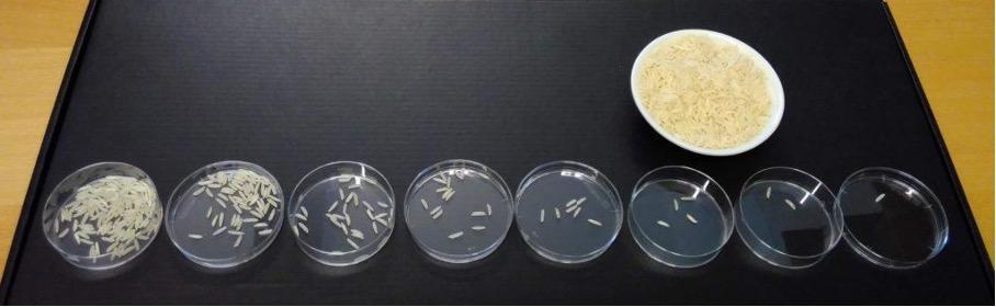 Petrisskåler med riskorn